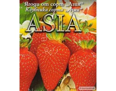 Сорт полуниці Азія