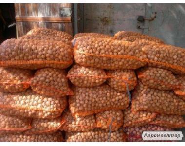 Продам орех грецкий неочищенный оптом