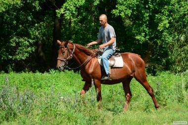 Тракененская кобила 2012 р.