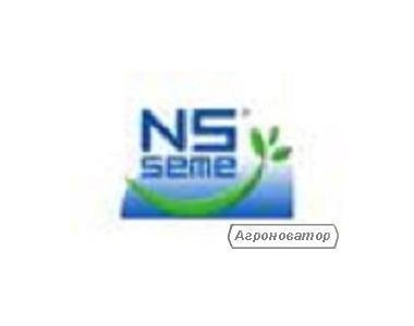 Гібрид соняшника НС-Х-6042 Сербія