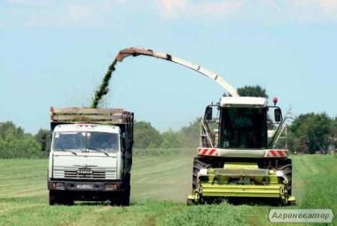 Заготівля багаторічних трав на сінаж та кукурудзи на силос.