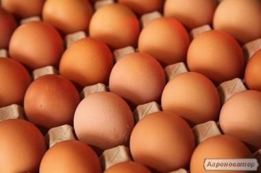 Продам яйцо куриное коричневое С1 от производителя ПП СВТФ