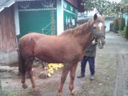Рабочий конь 14500грн