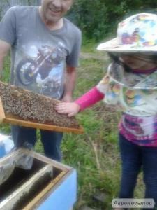 Чистопородні F-0 бджолині матки Бакфаст.