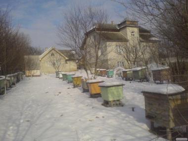 Пчелы почтой
