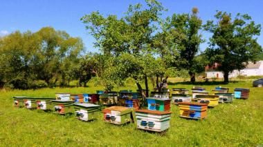 Продам бджолопакети 2017