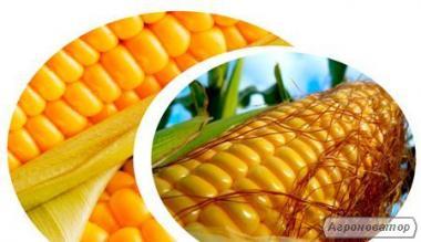 Гібриди кукурудзи , Гран 220, Гран 310, Гран5, Амарок, ВН 63, ВН 6763