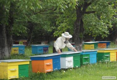 Продам бджолосім'ї (продам пчелосемьи)