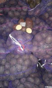 Продам картоплю товарний сорт Алладін оптом
