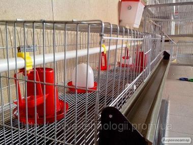 Клетки для цыплят ЭКО-100