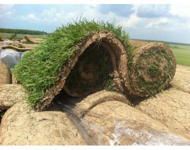 Рулонний газон