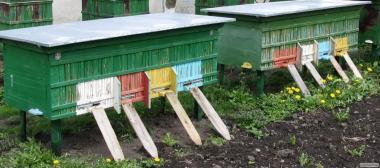 Продам Бджолопакети Карпатської породи Оптом
