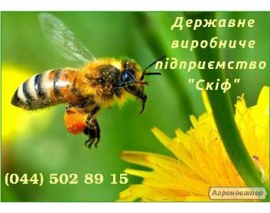 Кормушка для бджіл