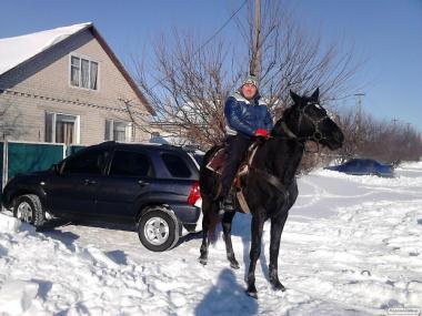 Продам коня в отличной форме