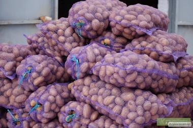 Продаю Картоплю Гуртом!!! Урожай-2017!