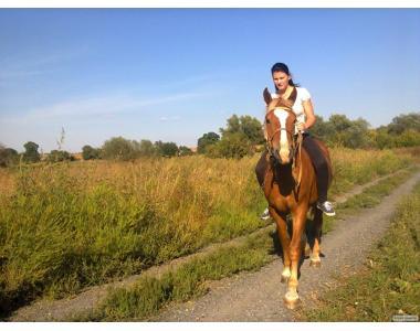 Конь, жеребец 2года, спокойный, объезжен, можно с телегой и упряжью