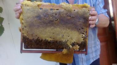Мед бджолиний натуральний