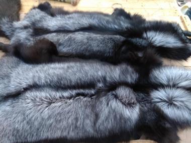 Мех чернобурки Silver fox