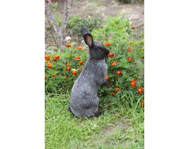 Племенные кролики Полтавское Серебро, Калифорнийские,