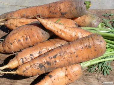 морква Забарвлення
