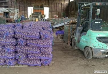 Укладемо договір поставки картоплі