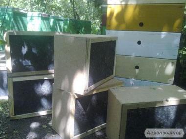 Продаж бессотовых бджолопакетів!!!