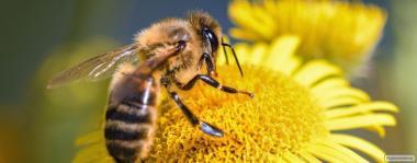 продам бджолопакети 2019