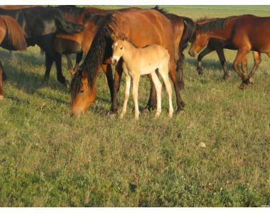 Продам коня і молодняк