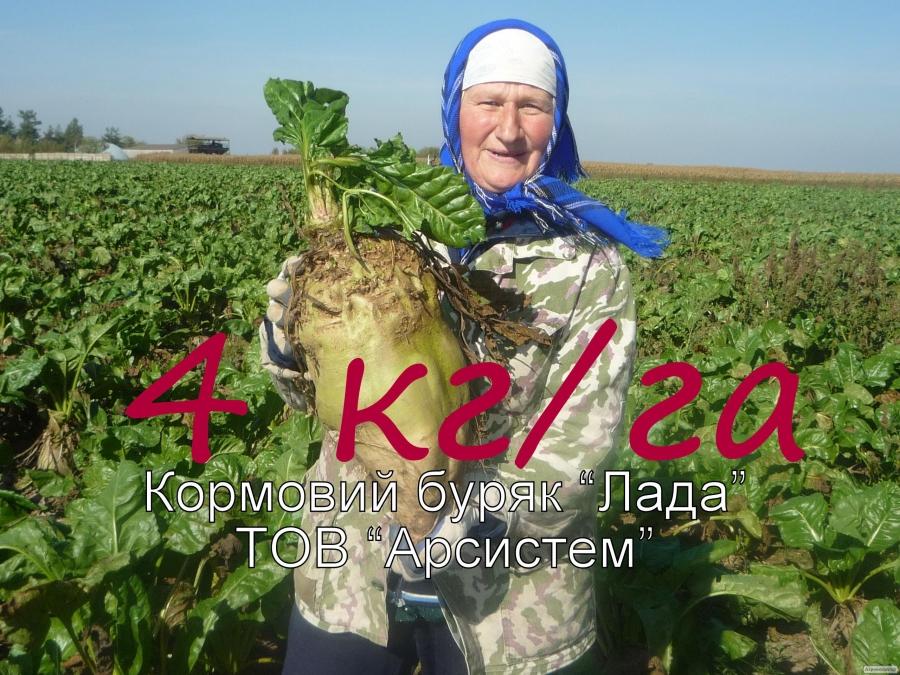 """Насіння суперурожайной кормових буряків """"Лада"""""""