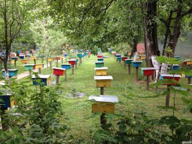 Продам плідні бджолині матки породи