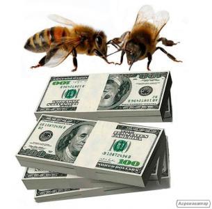 Продам 100 бджолопакетів породи бджіл КАРНІКА на рамку 230.