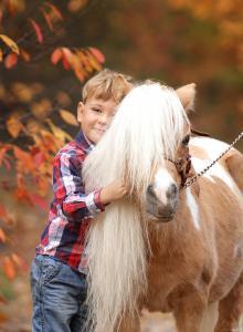 карликовый американский конь Стар