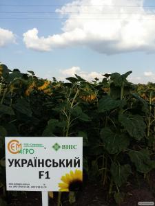 Український F1