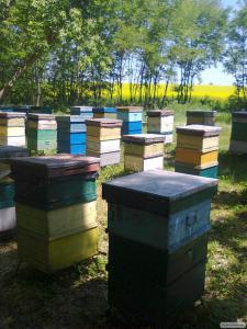 Продам мед з власної пасіки 2016 року.