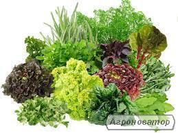 Продам салат импорт Испания, свежую зелень, пряные травы в ассорт