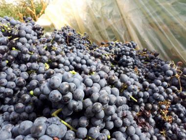Вино домашнє. 100% натуральне. Опт/роздріб