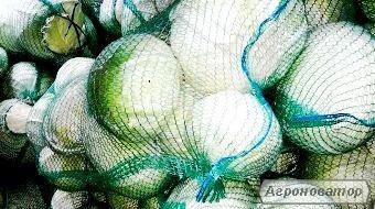 Продам капусту Агресора