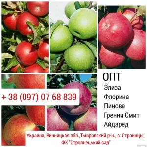 Продам яблоки. Сорт: Элиза, Флорина, Пинова, Гренни Смит, Айдаред