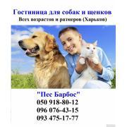 Готель для собак та цуценят Лиса Гора від 50 до 250 грн.