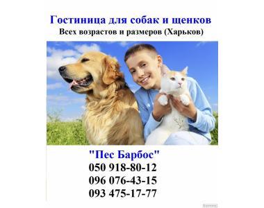 Гостиница для собак и щенков Лысая Гора от 50 до 250 грн.