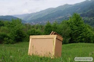 Продам бджолпакети.