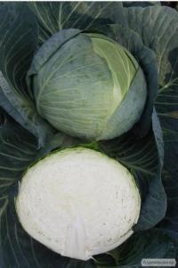 Продам средне-позднюю капусту Центурион, Бригадир