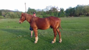 Продам коней!