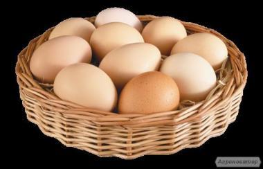 Надаємо послуги інкубації яєць!