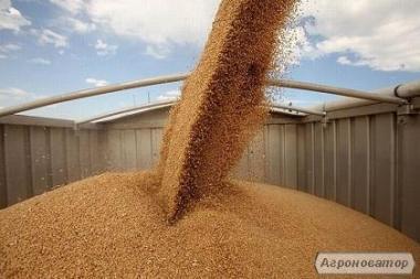 Транспортировку зерновых грузов. Услуги зерновозов
