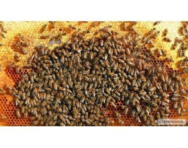 бджолопакети бджолосім'ї суш мед бджільництво