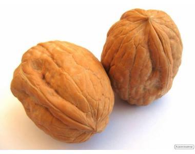 Продам бойний орех