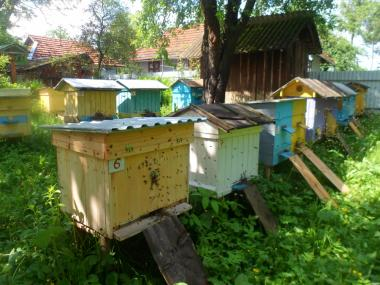 Продам бджолопакети 20-25 шт.