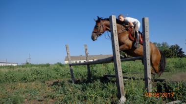Кінь, кобила чистокровна, Українська верхова, спортивна