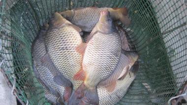 личинка риби